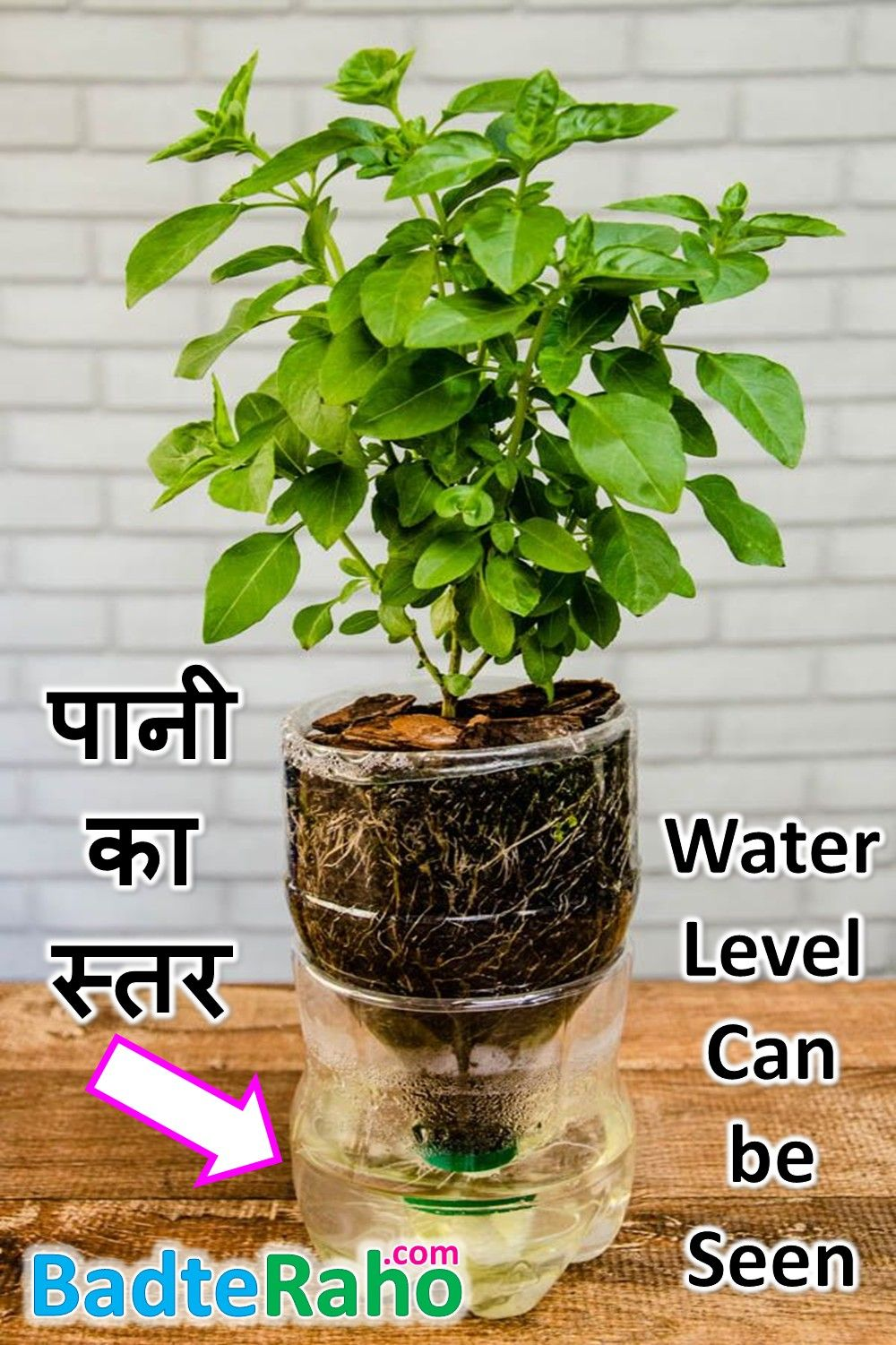 self watering plant pot water-level