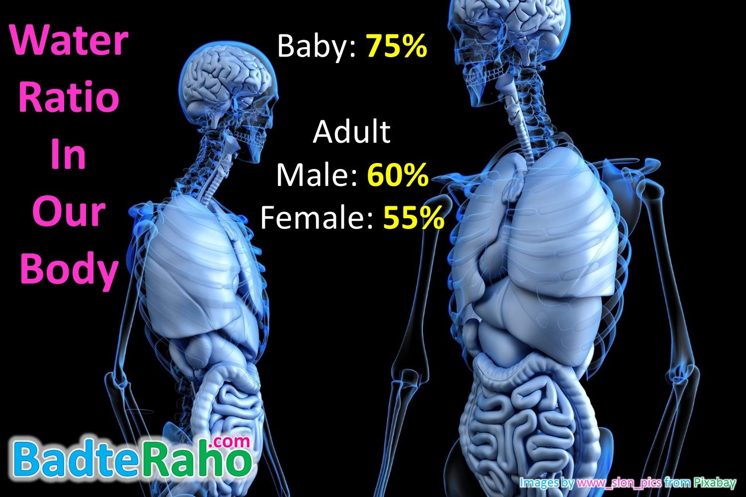 water-ratio-in-human-body